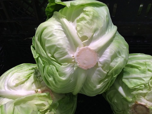 cabbage-1586316_640